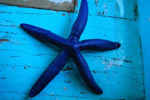 Bintang Laut di Tanjung Tengah