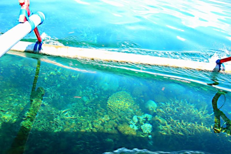 Rombongan kami menemukan terumbu-terumbu karang yang terlihat jelas dari atas perahu