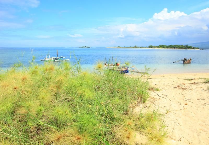 jalan-jalan ke pesisir pantainya nemu rumput  beginian. tajam kayak landak
