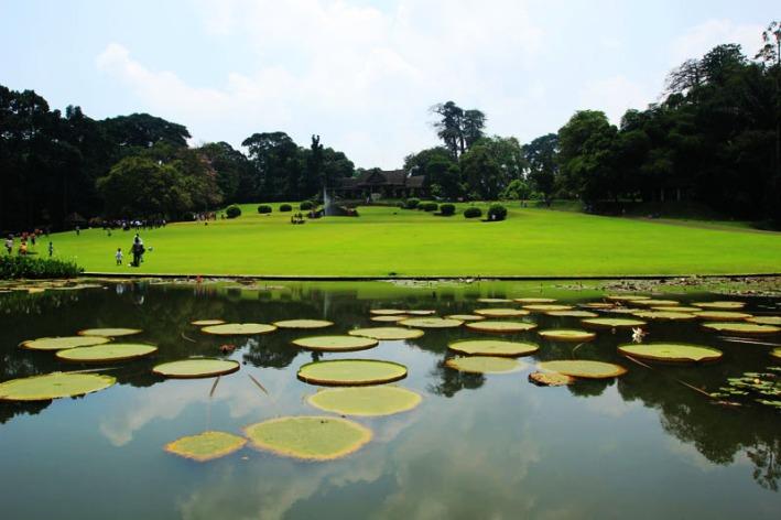 Taman Teratai Kebun Raya Bogor