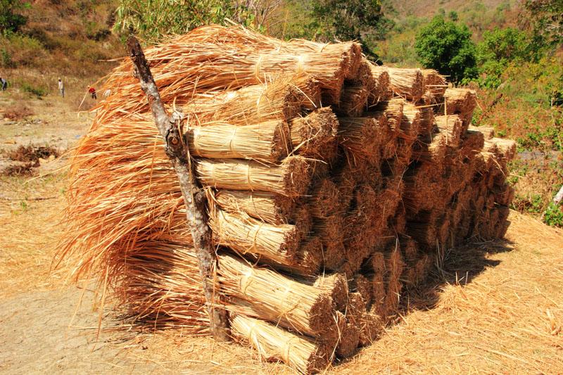 Rumput kering untuk bahan baku atap adat sasak