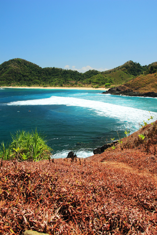 Rumput Merah di Bukit Mawi dengan latar Pantai Mawi