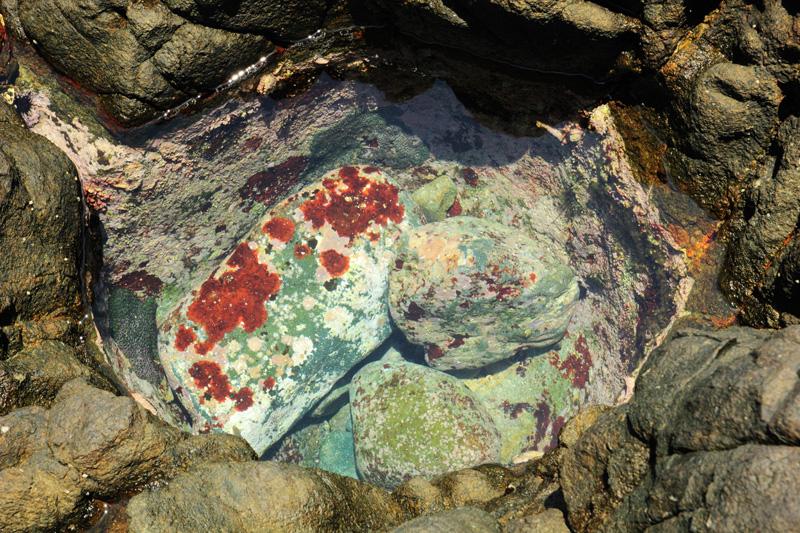 akuarium alam dengan batu-batuan hijau di dalamnya
