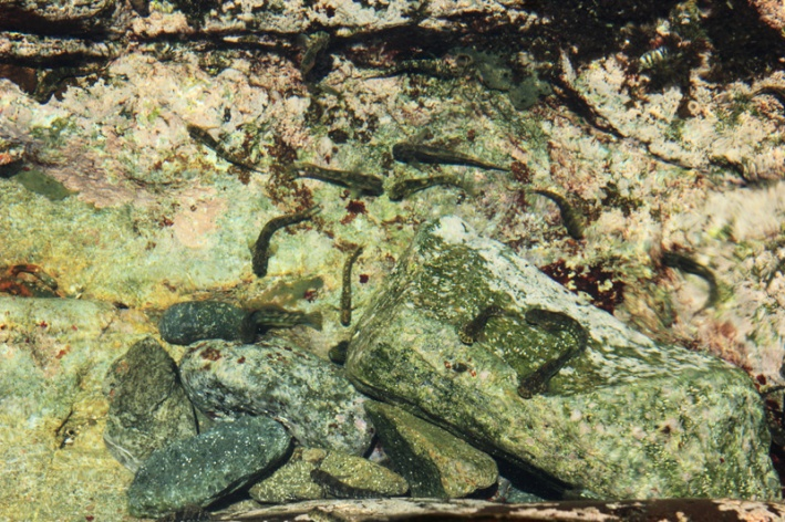 Ikan-ikan kecil di dalam akuarium alam