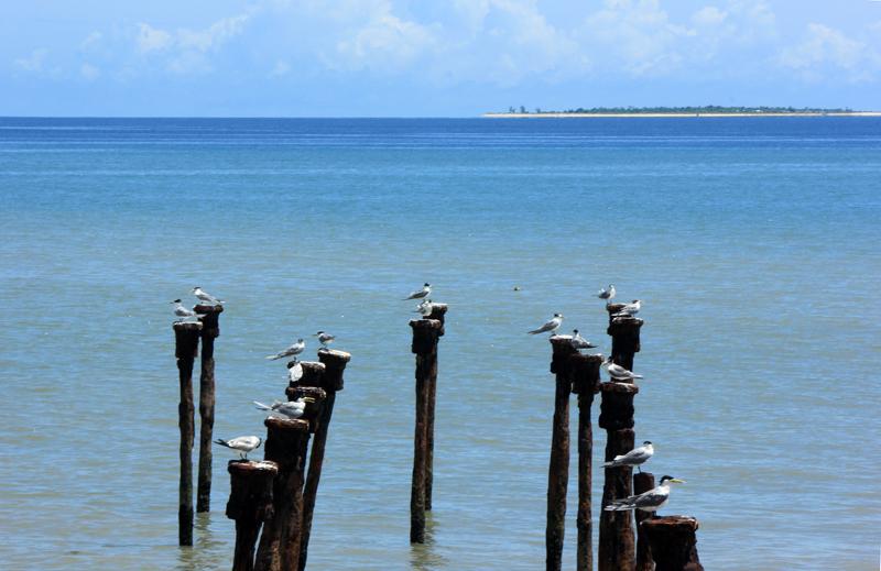 Sunbathing-Birds dengan latar Pulau Kera