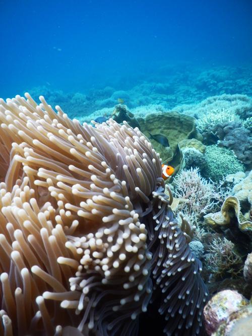 Ikan Nemo Petagan by Wet