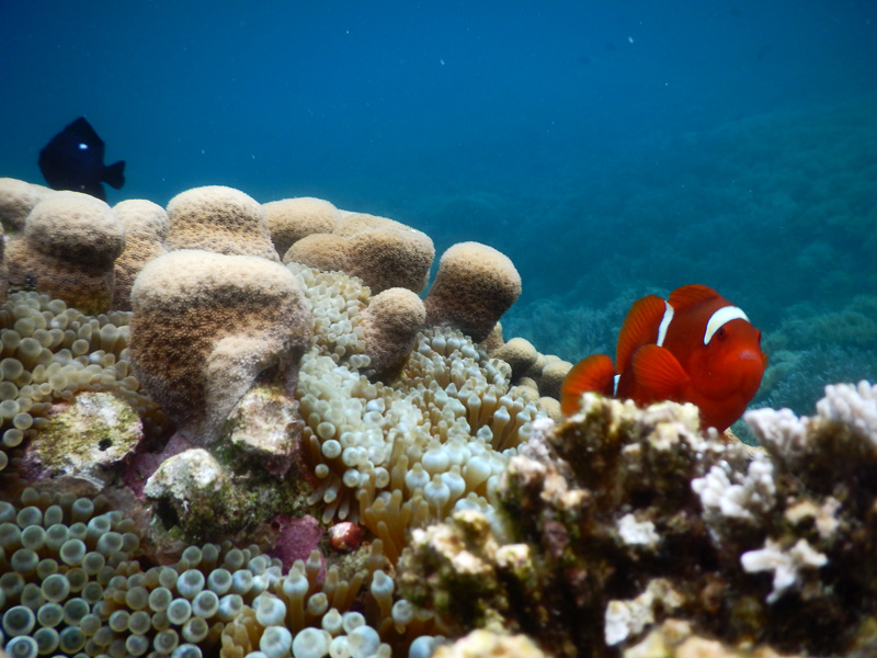 Nemo-nemo yang cantik by Wet