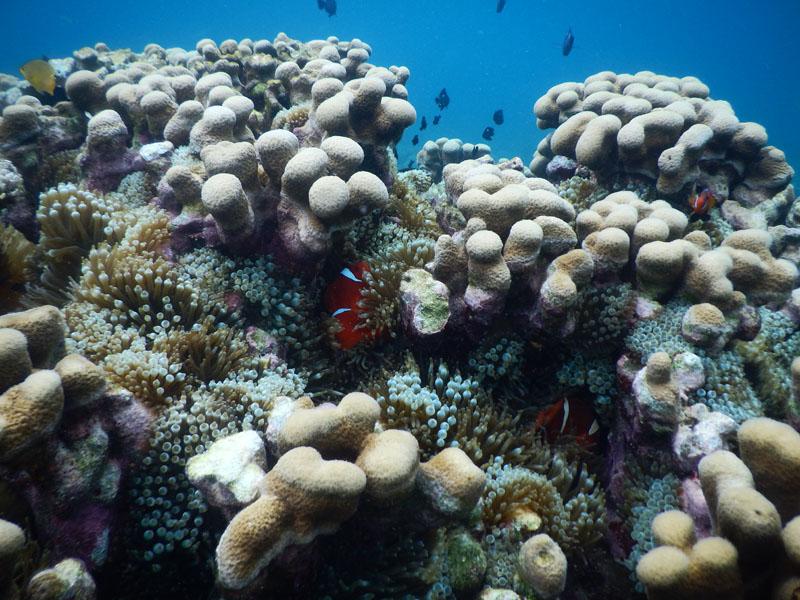 Ikan-ikan Nemo yang bersembunyi