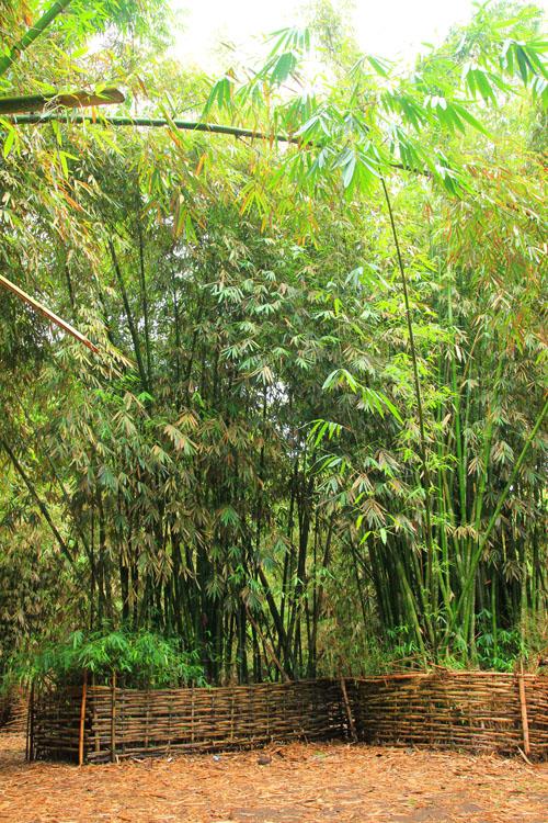 Bamboo Garden Sasak Village