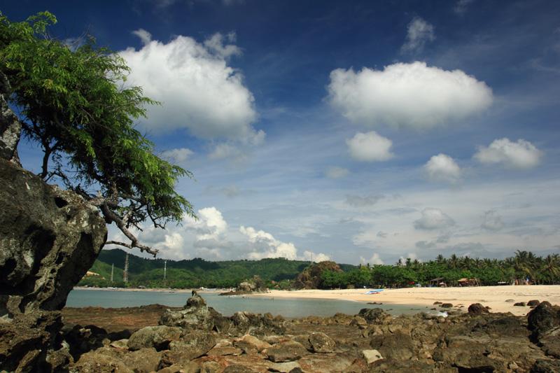 Pohon Asam di Tengah Pantai Kuta