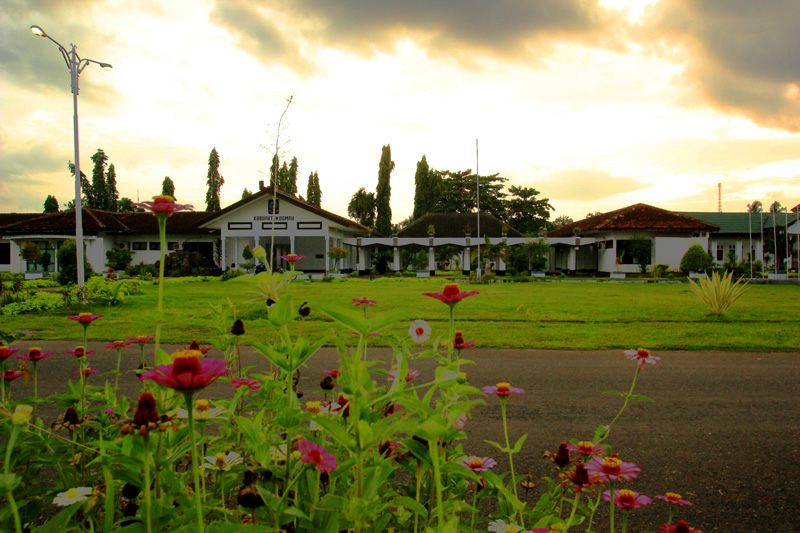 Bunga di Lapangan alun-alun kabupaten dompu berlatar kantor dan Cemara dengan cahaya sinar senja