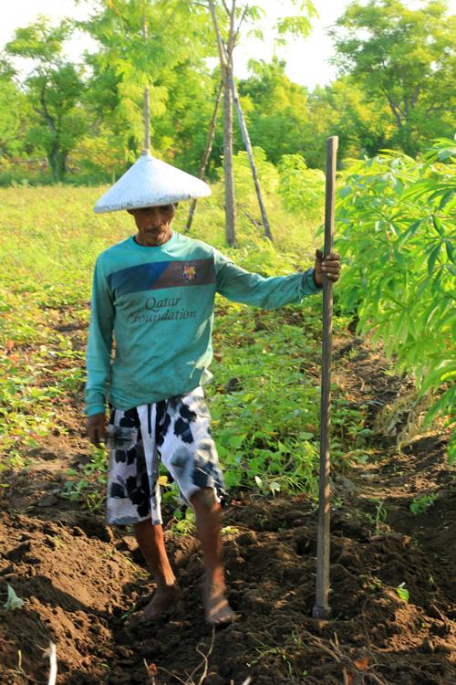 Pak Husni, Petani di Gili Kondo saat menggali ketela hasil pertaniannya