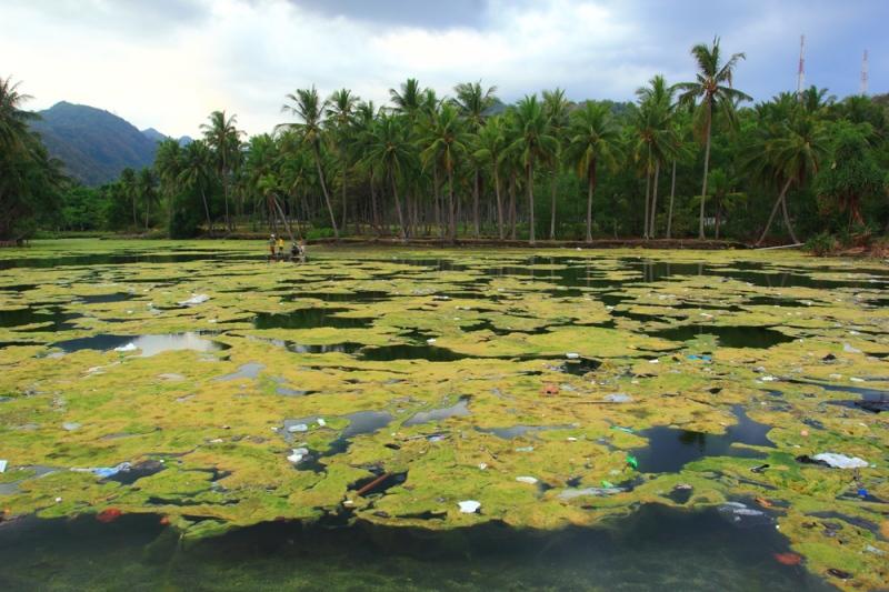 Sungai Lumut dan barisan pohon kelapa