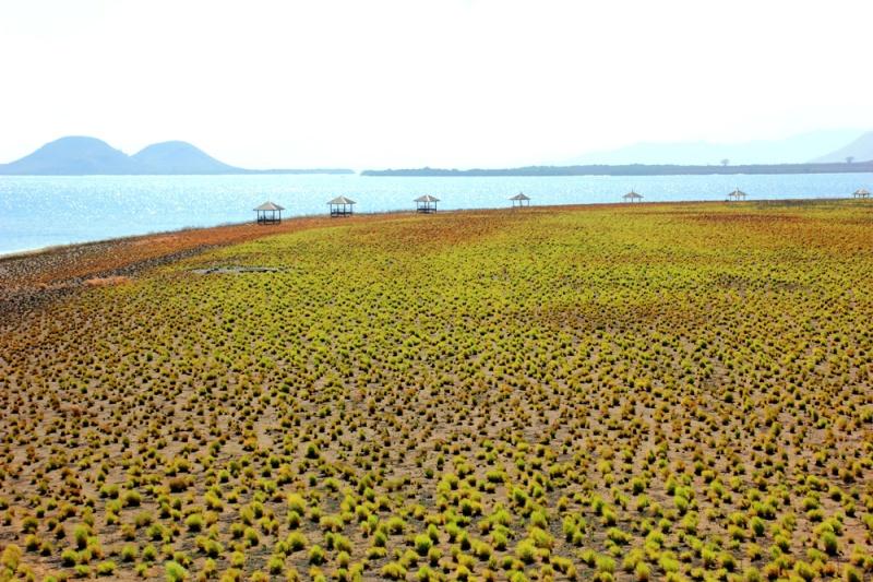 Rerumputan Kenawa yang terlihat dari Bukit Kenawa