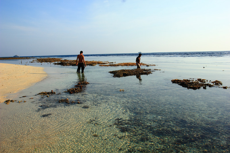 terumbu karang paserang yang muncul saat air surut